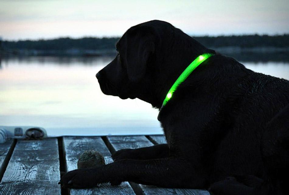Glowdoggie LED Dog Collars